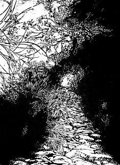 Sous bois - Luberon • gravure sur bois