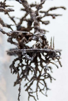 Racines de fer  (photo Dagmara Bojenko)