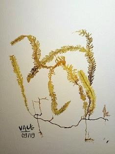 Vaug, Conspicuous Conception, 24 x 32 cm