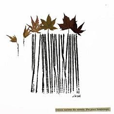 Lignes d'Acer palmatum