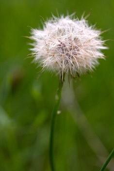 La fleur de l'âge, Beatnik