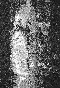 """""""Portrait œuvre de la multitude"""" 2010"""