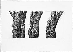 tres guardias del bosque 1-2-3  /2012 eau forte sur cuivre, matrice 3 x 20 x 30 cm tirage 10 exemplaires 78 x 57 cm sur hahnemühle blanc 300g