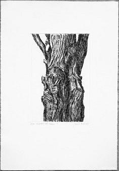 guardia del bosque 1 /2012 eau forte sur cuivre, matrice 20 x 30 cm tirage 10 exemplaires 58 x 57 cm sur hahnemühle blanc 300g