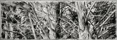 «gardiens des cimes» / 2013  fusain sur papier,1000x3000 mm