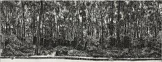 «Jardins des pierres Weissensee I» / 2015 eau forte sur cuivre, matrices 2x 25x65 cm  tirage 25 ex noir sur hahnemühle 52x75 cm