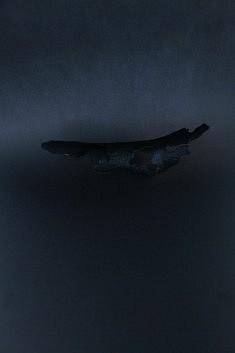 Ecorce flottante, Les Nuits, Pauline Thomas, 2015 ( photographie )