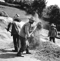 © Henri-José Legrand Battage du blé en Kabylie