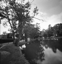 """© Monique Martin """"Inspirée du roman de Raymond Radiguet"""" - LE DIABLE AU CORPS- Je me suis promenée dans le parc champêtre du MORBRAS à Sucy en brie dans le Val de Marne où l'écrivain  avait fait de ce site le cadre de ses promenades.  En fixant les photos avec mon sténopé j'ai ajouté du mystère avec le flou à cet endroit superbe et envoûtant """""""