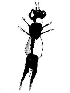 L'Envol de la Fourmi - gesso noir et feutre sur papier - 21x30cm - 2020