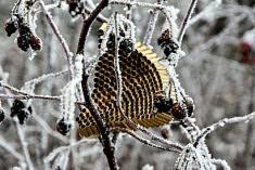 Isabelle Terrisse, Nids Snow (Photographie Sur Dibond, 20x30cm), 2017