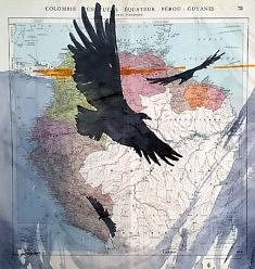 Exposition #1, Cyril Reguerre, Condor, 2019, encres sur carte, 42 x 42 cm