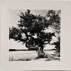Série Empreintes EM9 - Le viel arbre, technique mixte sur toile, 40x40cm, 2020