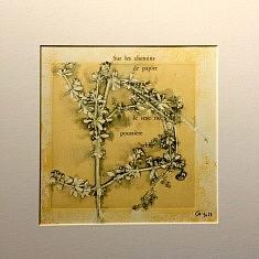 """Phytogravure  """"sans encre ajoutée"""" de Gaillet"""