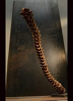 A l'ombre d'Odin - Noyer – Hauteur : 117 cm