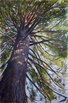 Sous les jupes du sequoia, la danse, hst 146*97 cm