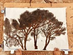Pins parasols. Encre et pastel gras sur papier japonais. 97 x 67 cm.Aout2020