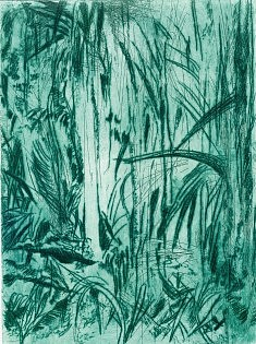 jungle eau-forte, aqua-tinte , pointe sèche 2017