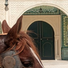 Animalité, Cheval musulman