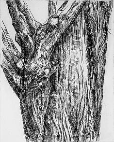«guardians de les arbredes, imparell» 2012 berlin 2012  / eau forte, vernis mou  matrice 40x50 cm  tirage 10 exemplaires sur hahnemühle 57x78 cm