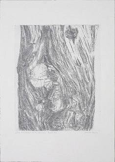 """""""guardians de les Arbredes - Parell bis""""   Eau forte sur papier, verni mou,  tirage argent matrice  30x40 cm  sur heinemuhle ou zerkal 76.5 x 57 cm"""