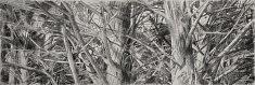 «gardiens des cimes 1» paris 2013  / fusain sur papier, 100x300 cm