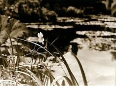 Monet aurait sans doute aimé...